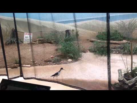 bird chasing other bird at the lincoln park zoo chicago illinois