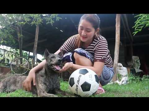Amazing!! Smart Dog Play With Girl At Home   Smart Dog Play With Cute Girl At Home