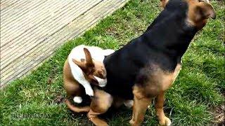 ПРИКОЛЫ С ЖИВОТНЫМИ | FUN WITH ANIMALS #189