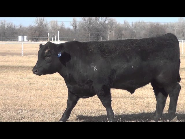 Express Ranches Lot 45