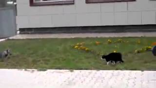 Crazy Cat Attacks Dog! [must Watch]