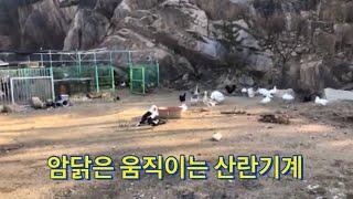 시골에서 닭 편하게 키우는 방법
