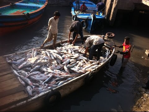 Karachi Fisheries - Fishing in Karachi, Arabian Sea