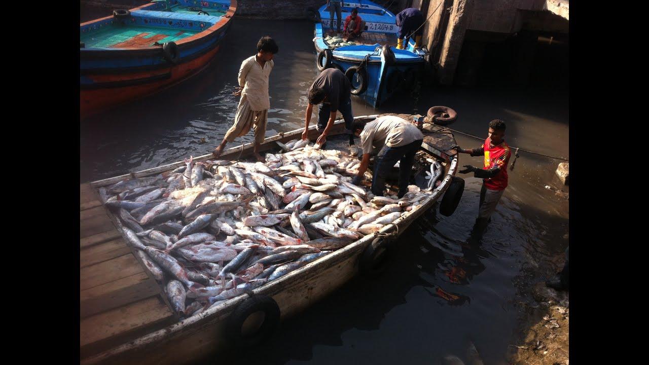 R Fisheries Karachi Fisheries - Fi...