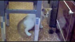 Котенок Кузя, стул и шишка
