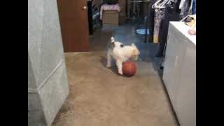 Chuck loves to play ball. He is obsessed with this game.
