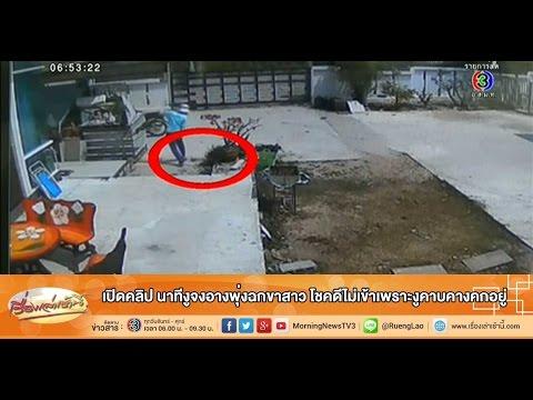 เรื่องเล่าเช้านี้ เปิดคลิป นาทีงูจงอางพุ่งฉกขาสาว โชคดีไม่เข้าเพราะงูคาบคางคกอยู่ (04 ก.พ.58)