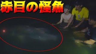 【衝撃】日本の怪魚アカメを釣ったらでかすぎた・・・!!#3 thumbnail