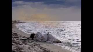 Khi Tôi Chết Hãy Đem Tôi Ra Biển... Diễn Ngâm: Nang Hoang Hon