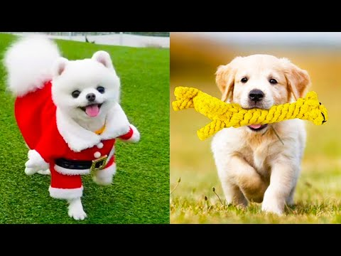 Baby Dogs – Cute and Funny Dog Videos Compilation #18 | Aww Animals