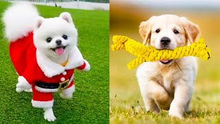 Baby Dogs - Cute and Funny Dog Videos Compilation #18 | Aww Animals