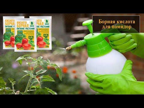Вопрос: В каких целях применяется борная кислота при обработке томатов?