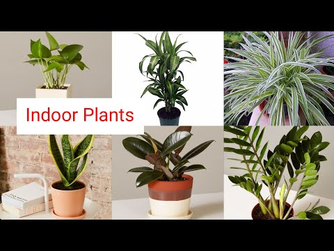 Best Indoor Plants For Beginners Plants For Purification Clean Air Decorative Houseplants