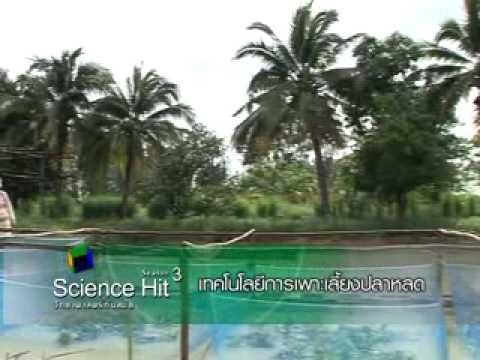 การศึกษาชีววิทยาบางประการ การเพาะ อนุบาล และการเลี้ยงปลาหลดเพื่อการถ่ายทอดเทคโนโลยีเกษตรกร