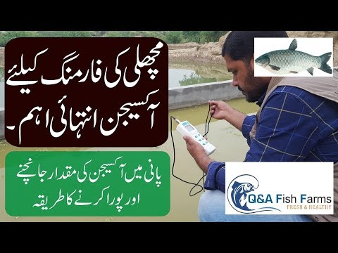 Introduction To Fish Farming. Importance Of Oxygen In Fish Farming. DO, Dissolved Oxygen. Video 11