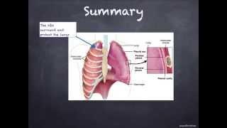 IGCSE. 2.8.  Human respiratory system