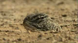 Nat Geo Wild - Secrets of Wild India - Desert Lions EP3
