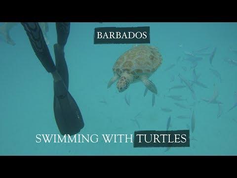 TRAVEL VLOG Ep.1| BARBADOS 2017 | TURTLES & SNORKELING!..