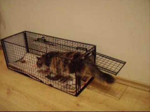 Jaula trampa multicapturas para capturar ratas ratone - Trampas para ratones vivos ...