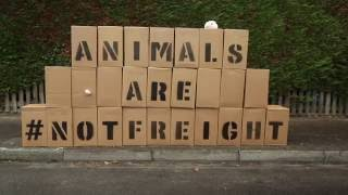 Zwierzę to nie towar - Globalny Dzień Akcji