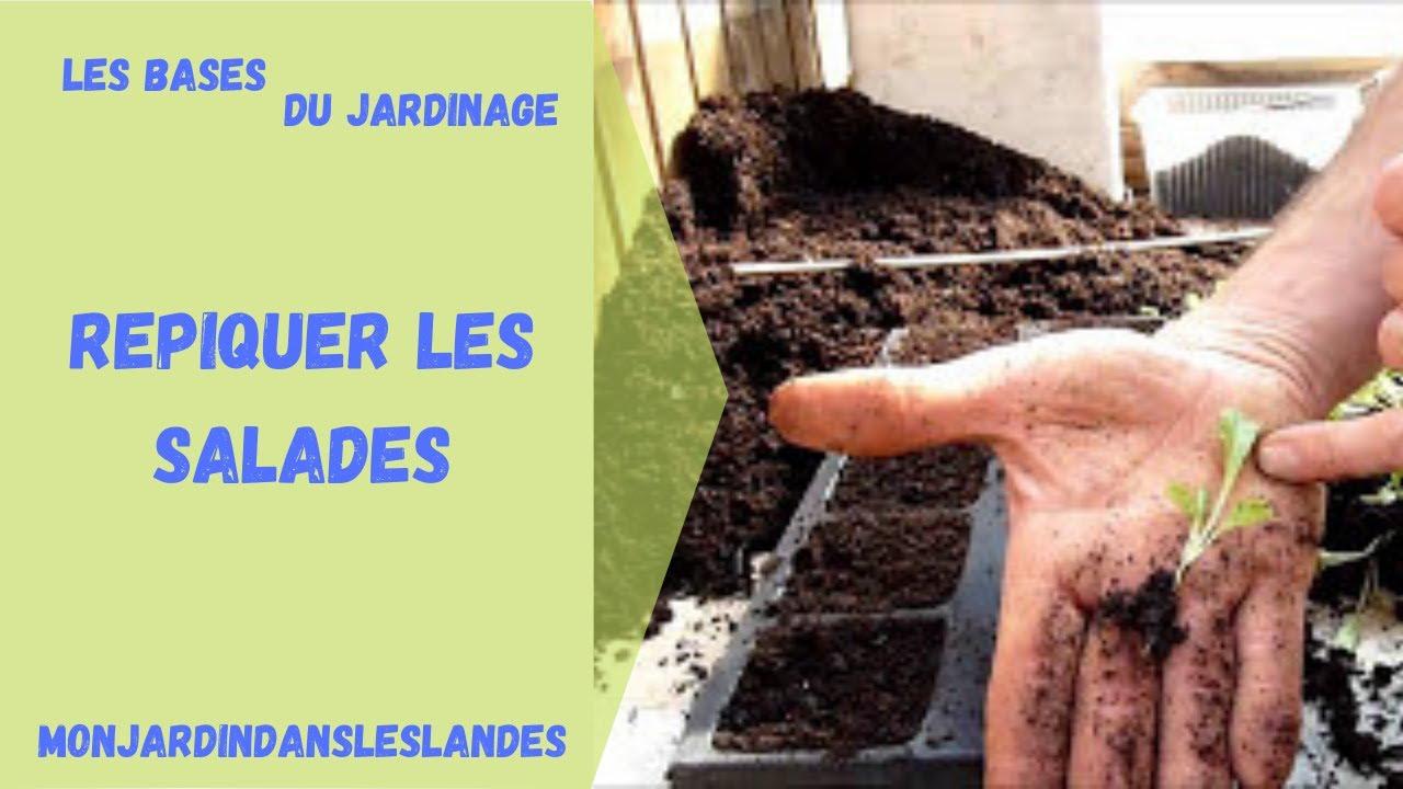 Nice quand repiquer les salades 9 semis en barquette auto irrigante - Quand repiquer les salades ...