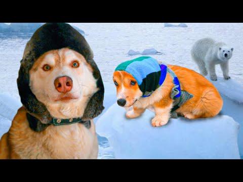 Уезжаем с КОРЖИКОМ на Северный полюс!! (Хаски Бублик) Говорящая собака
