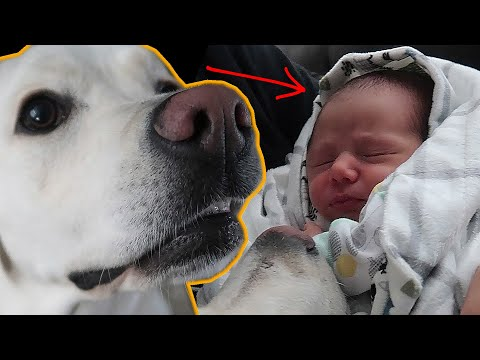 BABY MEETS PUPPY!!