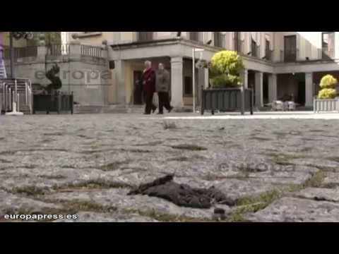 Spanish Town Mails Dog Poo Back to Their Owners
