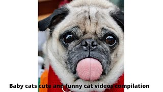 Baby cats cute and funny cat videos compilation