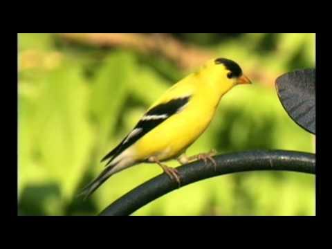 Wild Birds Unlimited - EcoClean® Canada (Eastern Birds)