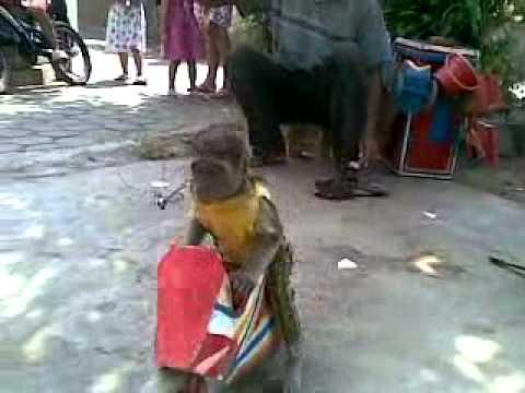 Topeng Monyet Or Mask Monkey