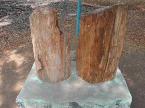 10 கோடி ஆண்டுகளுக்கு முந்தைய/sathanur fossil wood  /100,000,000 years ago./ must see in india/india
