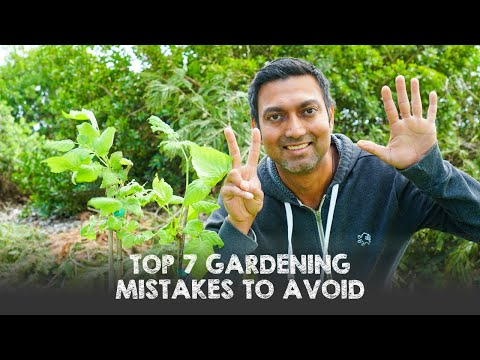 top-7-gardening-mistakes-to-avoid-specially-for-beginner-gardeners