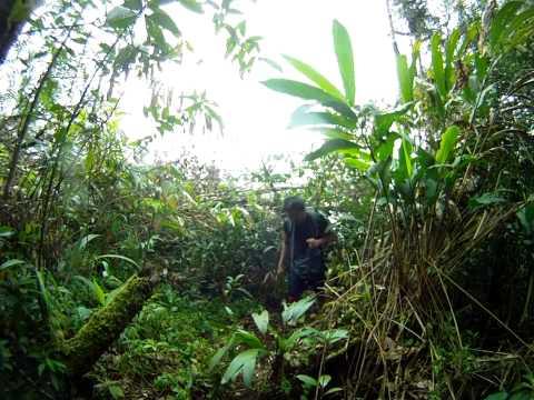 SKL - Hiking to Gunung Swettenham (1961m), Cameron Highlands, Pahang. (Video-61)