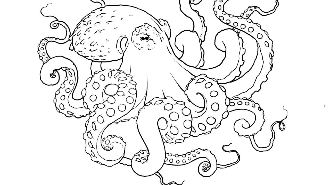 Drawing Octopus Tattoos Youtube