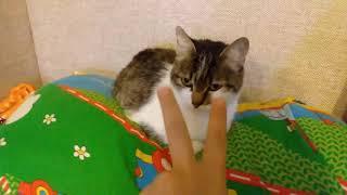 10 фактов о моей кошке / Наталья Короткова