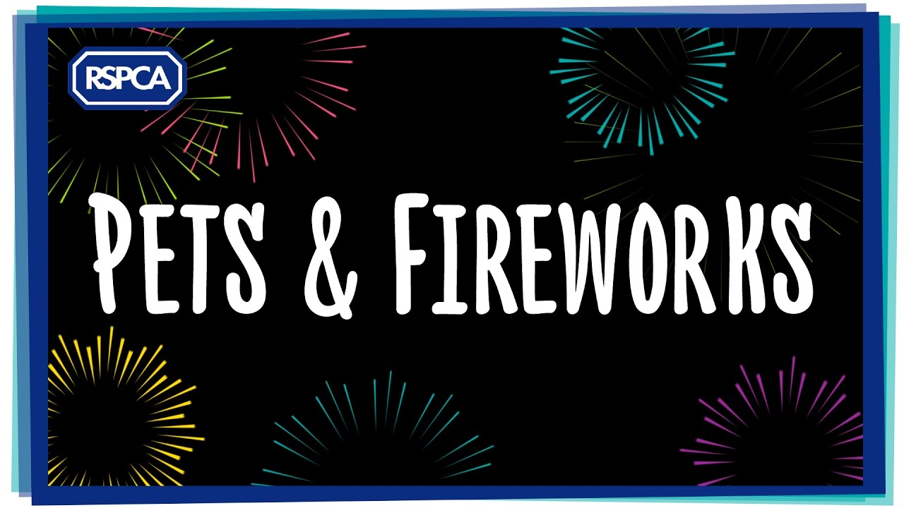 How to keep pets safe & happy during fireworks
