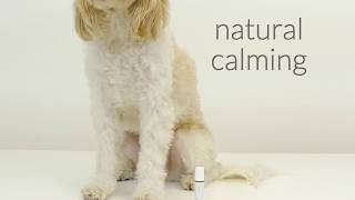 Essential Oils for Dogs by Dog Fashion Spa