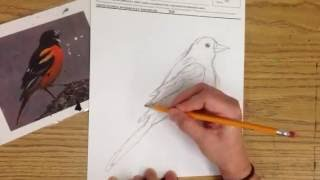 4th Grade Square One Birds, drawing video 1