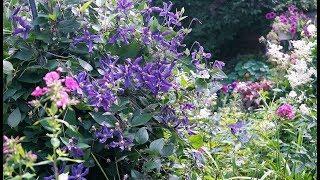 Вы не поверите! Я в саду Натальи Ивановой. Часть II. 'С фантазией и любовью'.