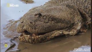 Видео анаконда мутант, anaconda mutant! Не может быть Самая большая змея! big snake, งู אַנאַקאַנדאַ