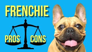 French Bulldog Pros and Cons ( Is It Worth The Money?? )