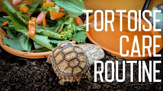 Tortoise Daily Care Routine | Feeding Time