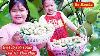 Pick  peaches in Vietnam - Đi Hái Đào - Trò chơi hái quả!
