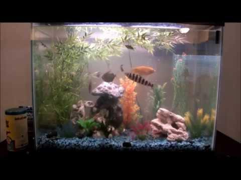 QFT 01: How To Keep Your Aquarium Plants Under The Gravel