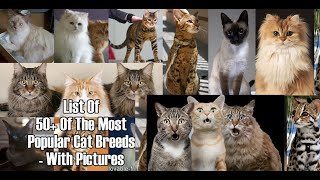 50 CatBreeds that Cat Lover Must Know: PART 1