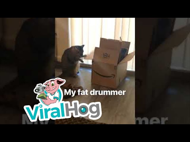 Little Drummer Cat || ViralHog