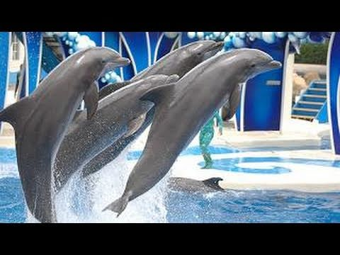 SeaWorld's Dolphin Show (voted