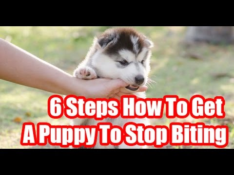 6-steps-how-to-get-a-puppy-to-stop-biting