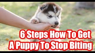 6 Steps How To Get A Puppy To Stop Biting
